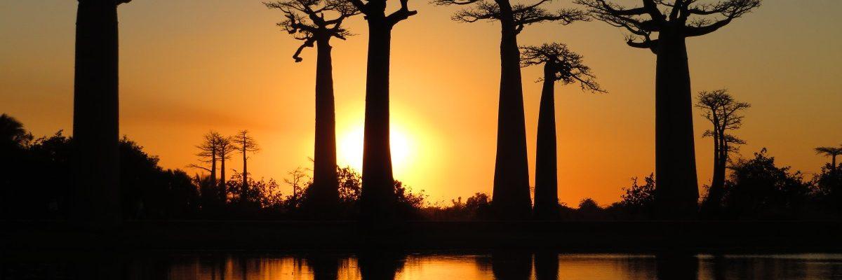Madagaskar: Allee des Baobabs